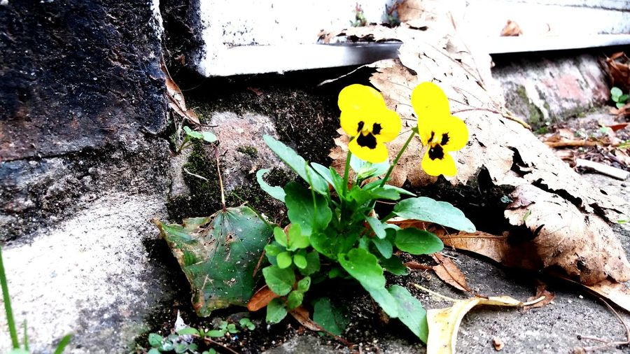 Couple In The City Yellow Outdoors Day Leaf Plant Growth No People Nature Close-up Flower First Eyeem Photo I Am New Here.