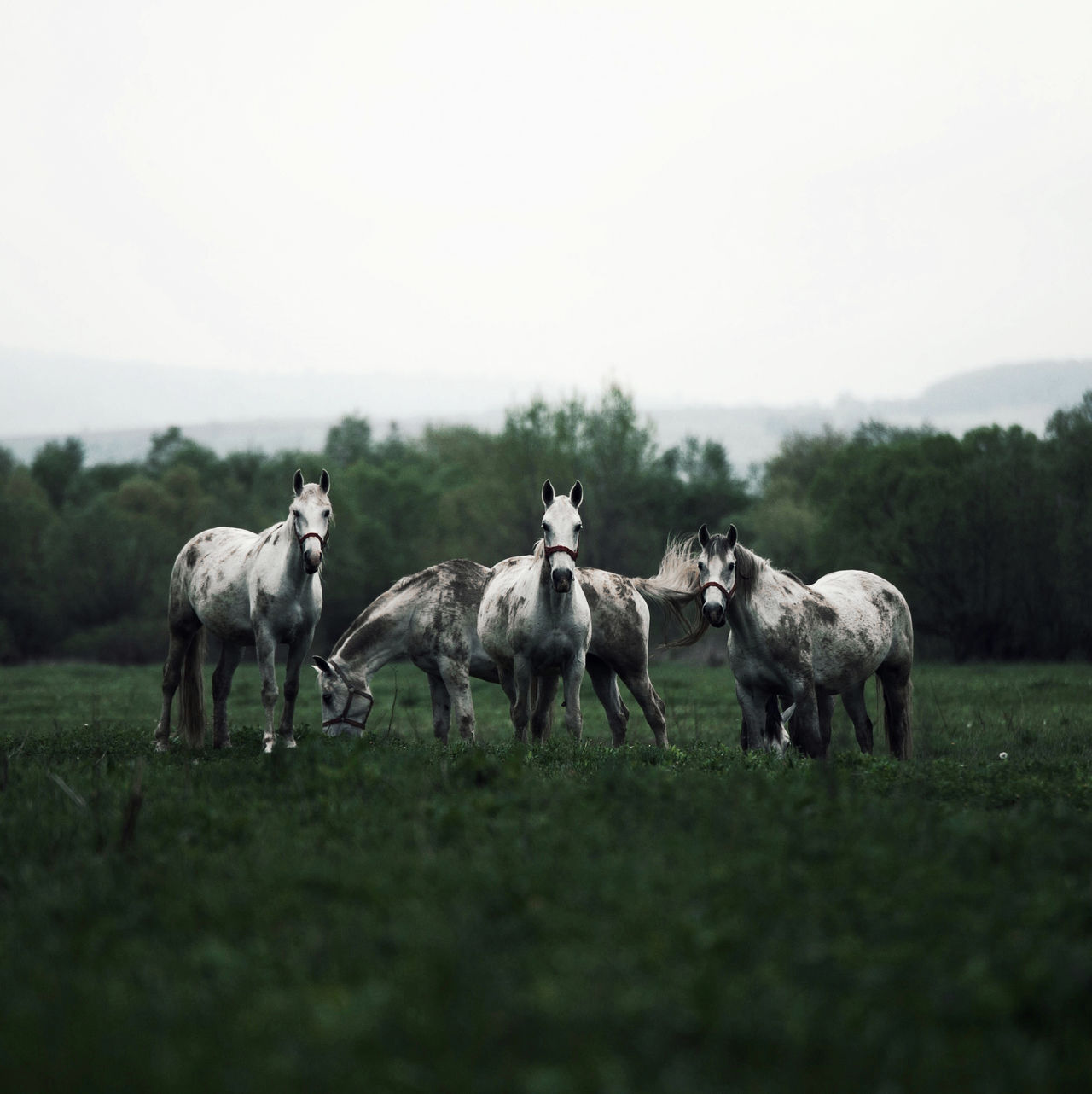 Animal Animal Themes Animal Wildlife Animals Animals In The Wild Day Domestic Animals Field Grass Green Color Horse Horses Landscape Livestock Mammal Nature Nature Nature Photography Nature_collection Naturelovers No People Outdoors Sky Tree White