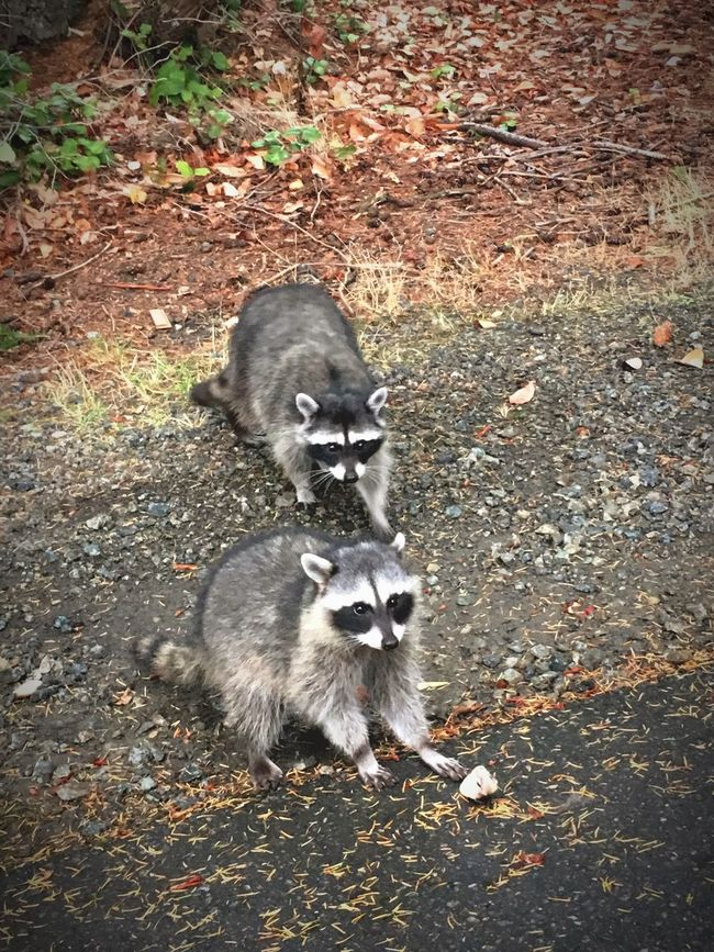 Outdoors Bandits