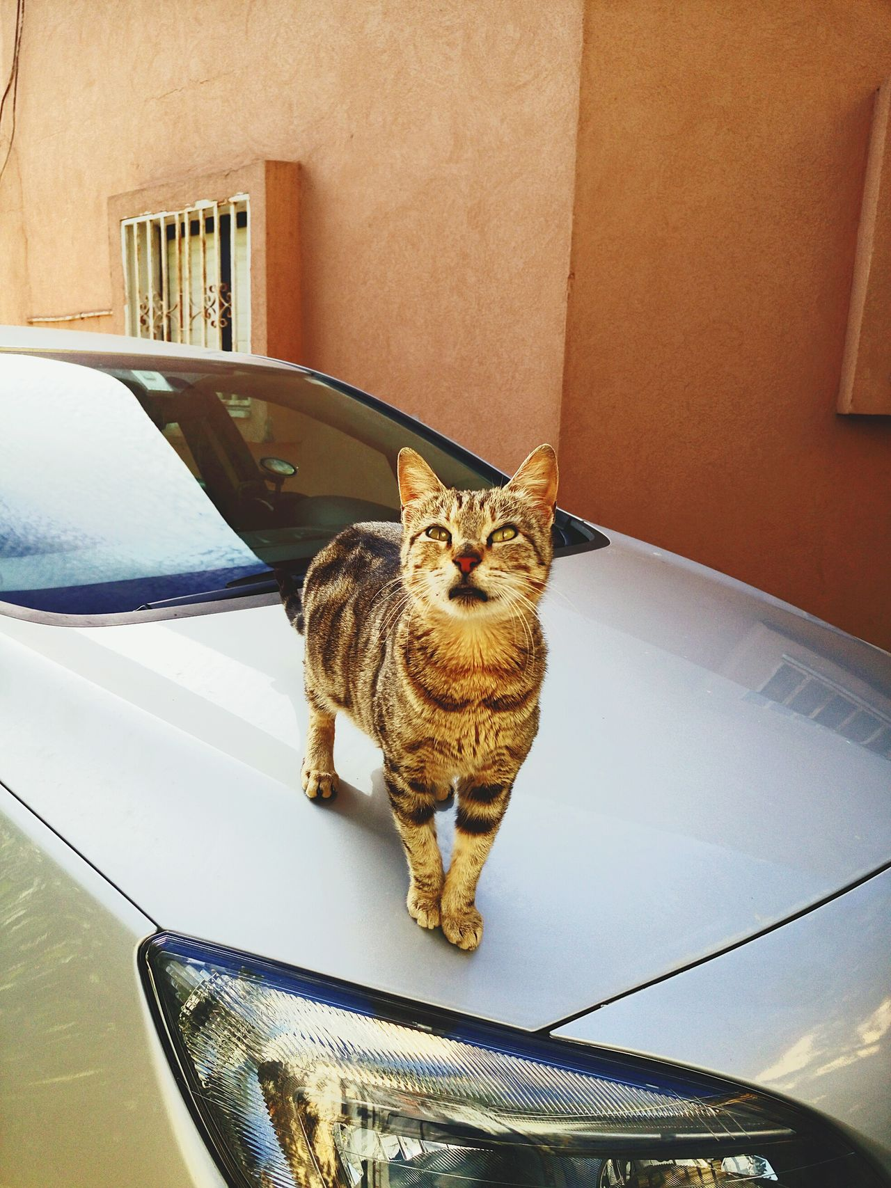 Showcase: January Hello World Relaxing Taking Photos Enjoying Life Israel Winter Morning Cat Lookingup Opel Astra