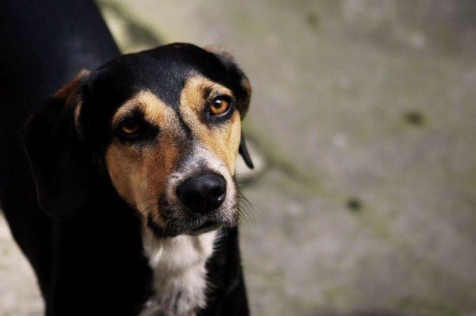 Dog Perro Animal Negro Cute Beautiful Costa Rica
