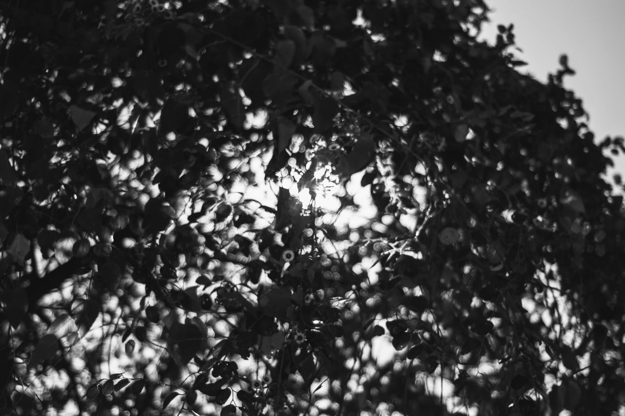 Through the tree. Blackandwhite Black And White Artistic Tree Through The Branches Bright Sun Shine Wildlife Nature