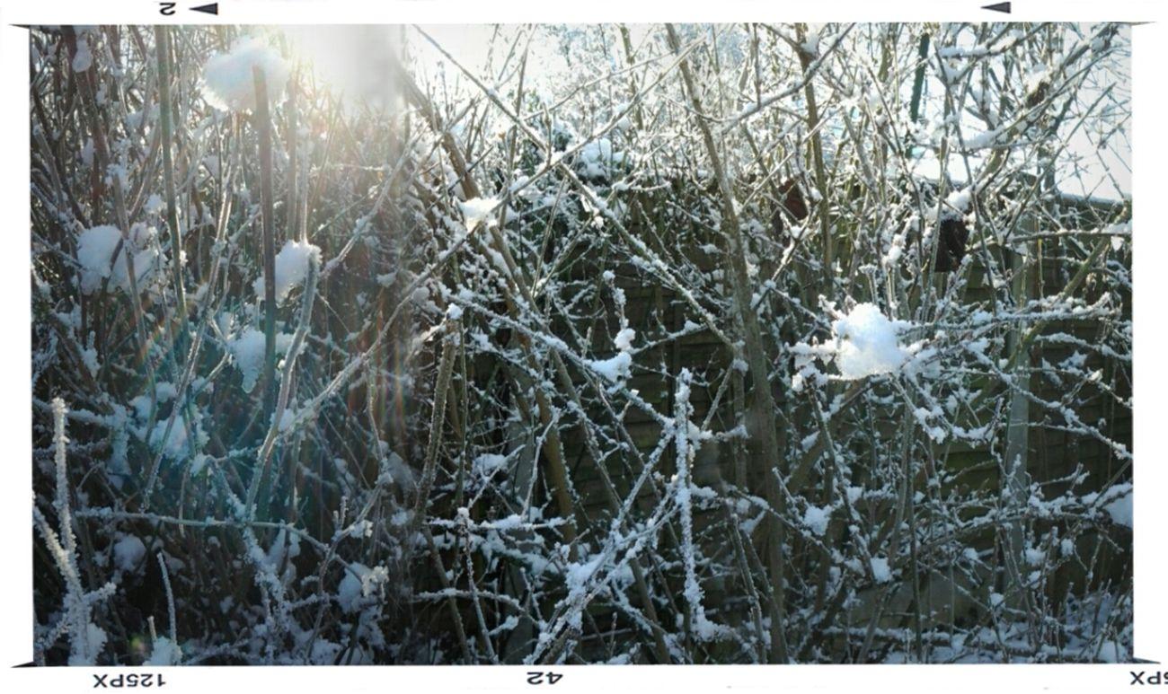 Snow garden !