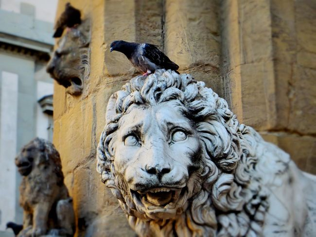 Animal Themes Architecture Art Art And Craft Bird Check This Out Close-up Day Enjoying Life Eye4photography  EyeEm Best Shots From My Point Of View Hello World Italian Architecture Lion Lion - Feline No People Outdoors Popular Popular Photos Sculpture Statue Statue Taking Photos The Places I've Been Today