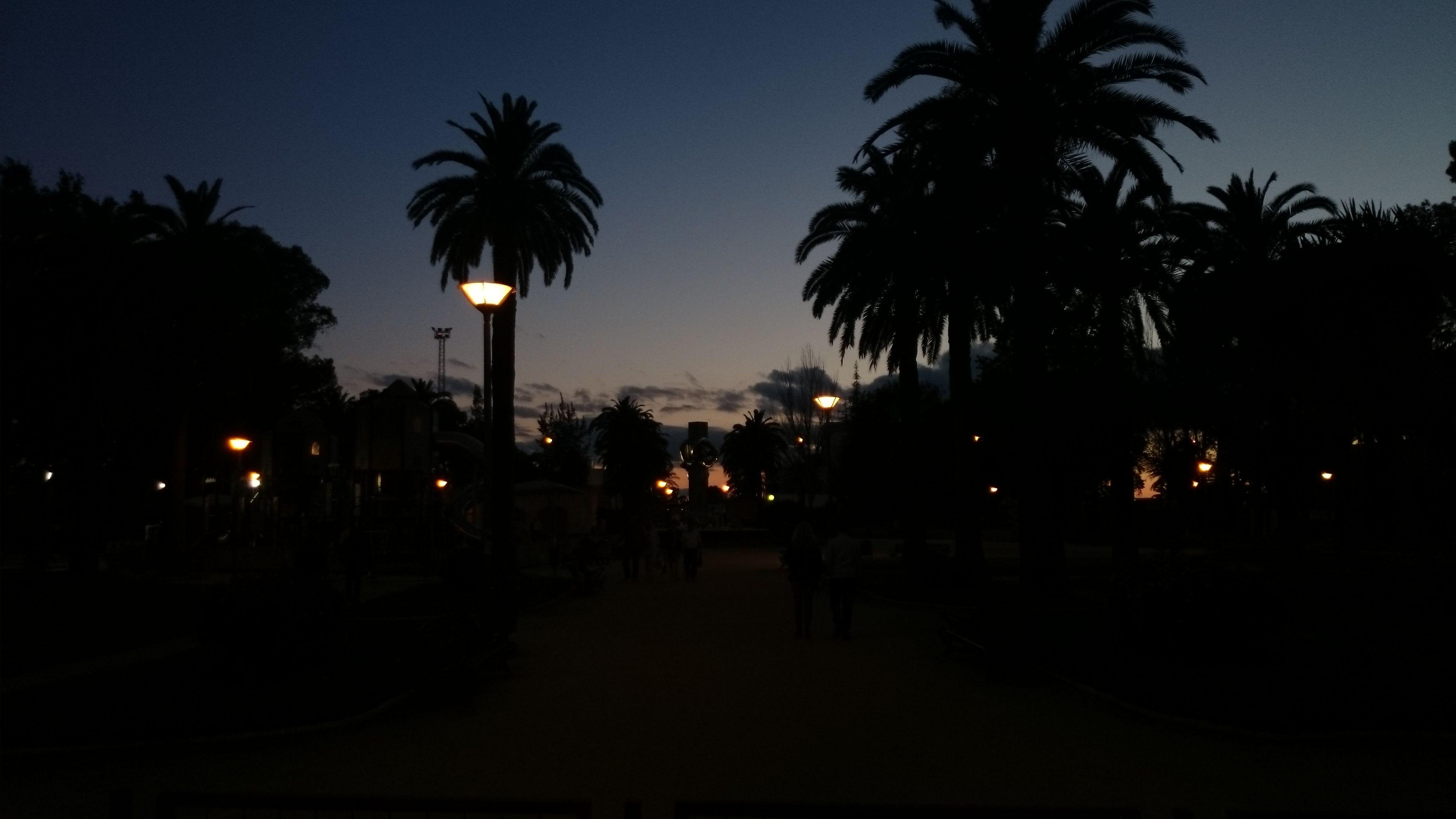 palm tree, tree, silhouette, illuminated, street light, sunset, sky, night, lighting equipment, dusk, street, clear sky, road, transportation, car, city, outdoors, dark, growth, tree trunk