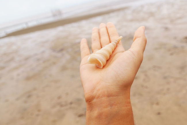 Beach Day Hand Holding Leisure Activity Lifestyles Open Up  Part Of Person Relax Sand Selective Focus Shell Shore