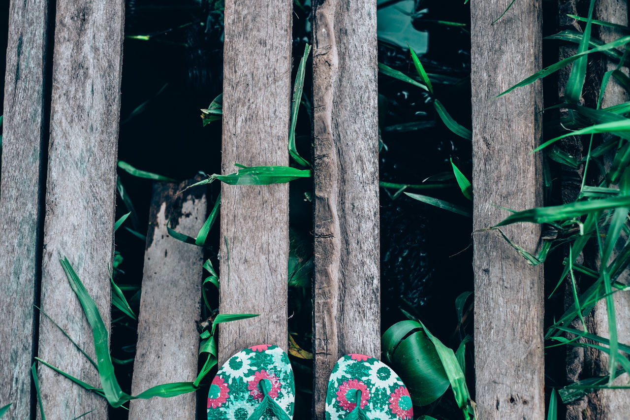 Slippers shot before crossing this semi broken coconut lumber bridge :D Adventure Backwoods Bridge - Man Made Structure Broken Exploring Flowery Foot Selfie Forest Green Color Growth Lily Low Section Nature Lifestyles Outdoors Path Real People River Slippers Beauty In Nature Travel Tree Trunk Wood - Material Vacation EyeEmNewHere