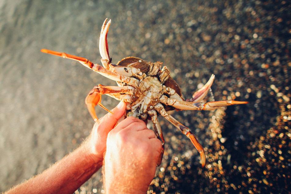 PNW PNWuan islands] PPNW At Its Finest Pnwnaturescapes Crab Crabbing Ocean View Orcas Island Islandlife Travel Photography
