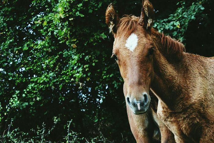 Babyhorse Horses EyeEm Animal Lover EyeEm Nature Lover EyeEm Best Shots