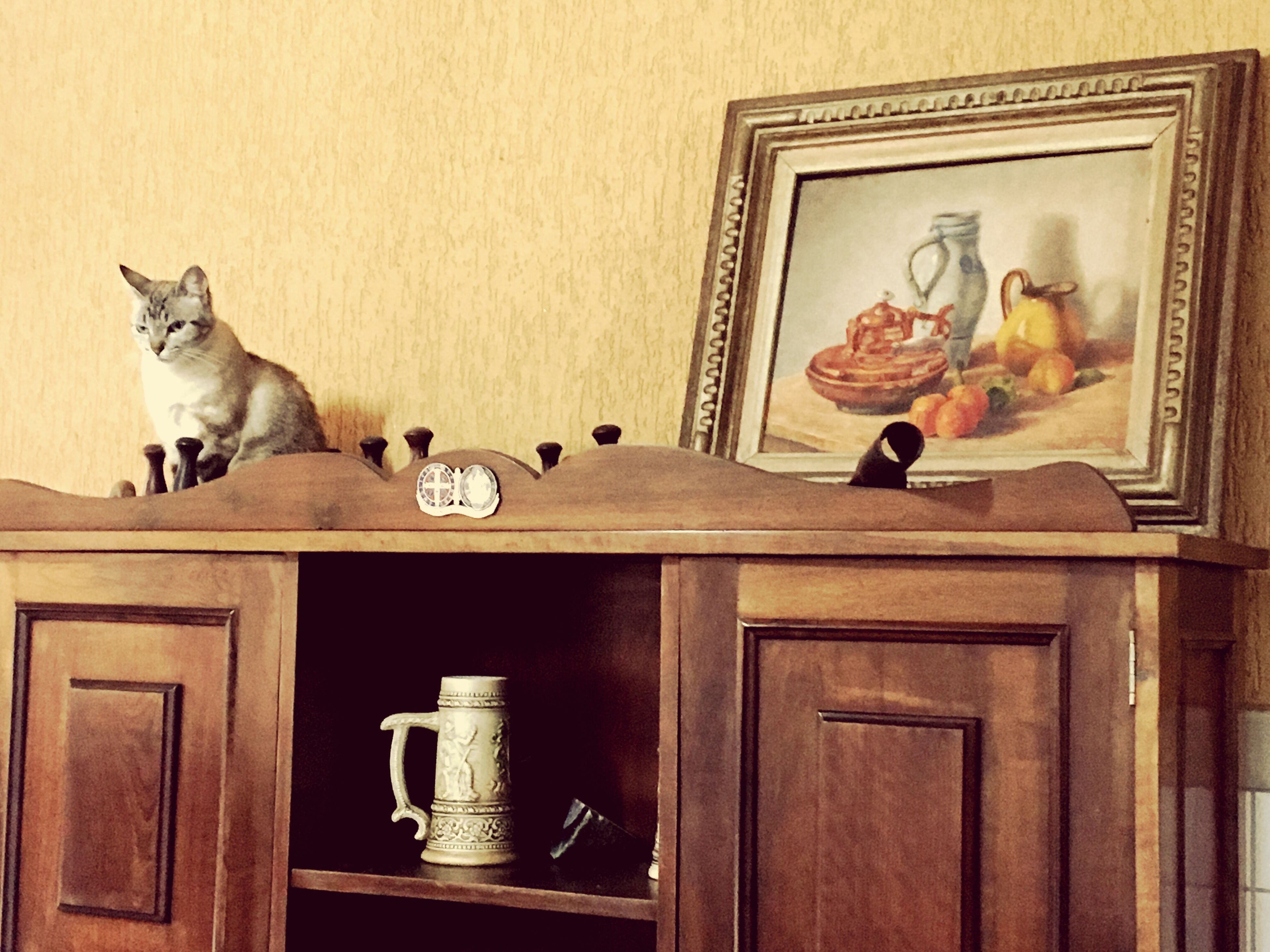 Just a Sissi. Pets Animal Themes Domestic Animals Cat Cats Painting Jacobusvanwilpe Brazil