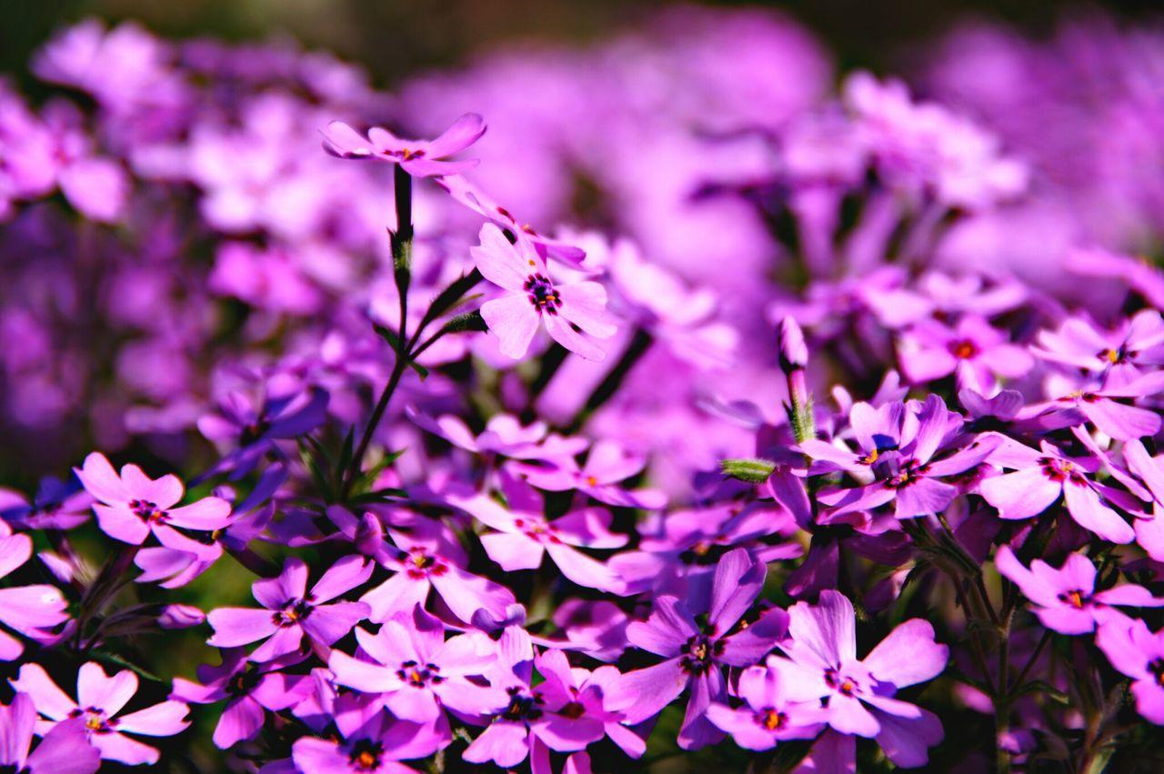 Nature Flowers EyeEm Best Shots - Flowers EyeEm Best Shots - Nature Depht Of Field
