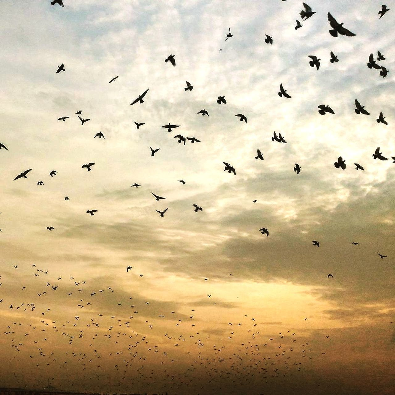 large group of animals, bird, flying, flock of birds, animals in the wild, animal themes, sky, migrating, mid-air, nature, beauty in nature, cloud - sky, wildlife, low angle view, animal wildlife, sunset, no people, outdoors, spread wings, silhouette, scenics, togetherness, day