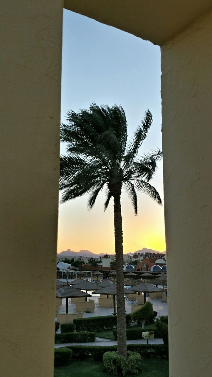 Coconut Tree Coconut Trees Learn & Shoot: Leading Lines Window View Framed By A Window Sunset Sunset_collection Mountains Pastels Pastel Power Pastel Colours Ladyphotographerofthemonth Interesting Perspectives Hotel Garden Beautiful Scenery Trees Collection Pink Beige Green Blue