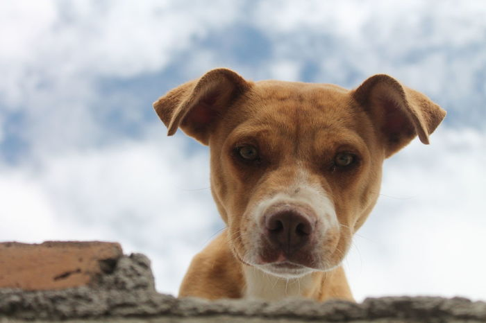 Doggo Dog Pets Portrait Looking At Camera One Animal Animal Water Domestic Animals Outdoors Animal Themes Alertness Day No People Mammal Sea Beagle Protruding Nature Retriever Close-up Perspectives On Nature