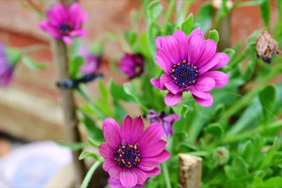 Flowers MyBackGarden