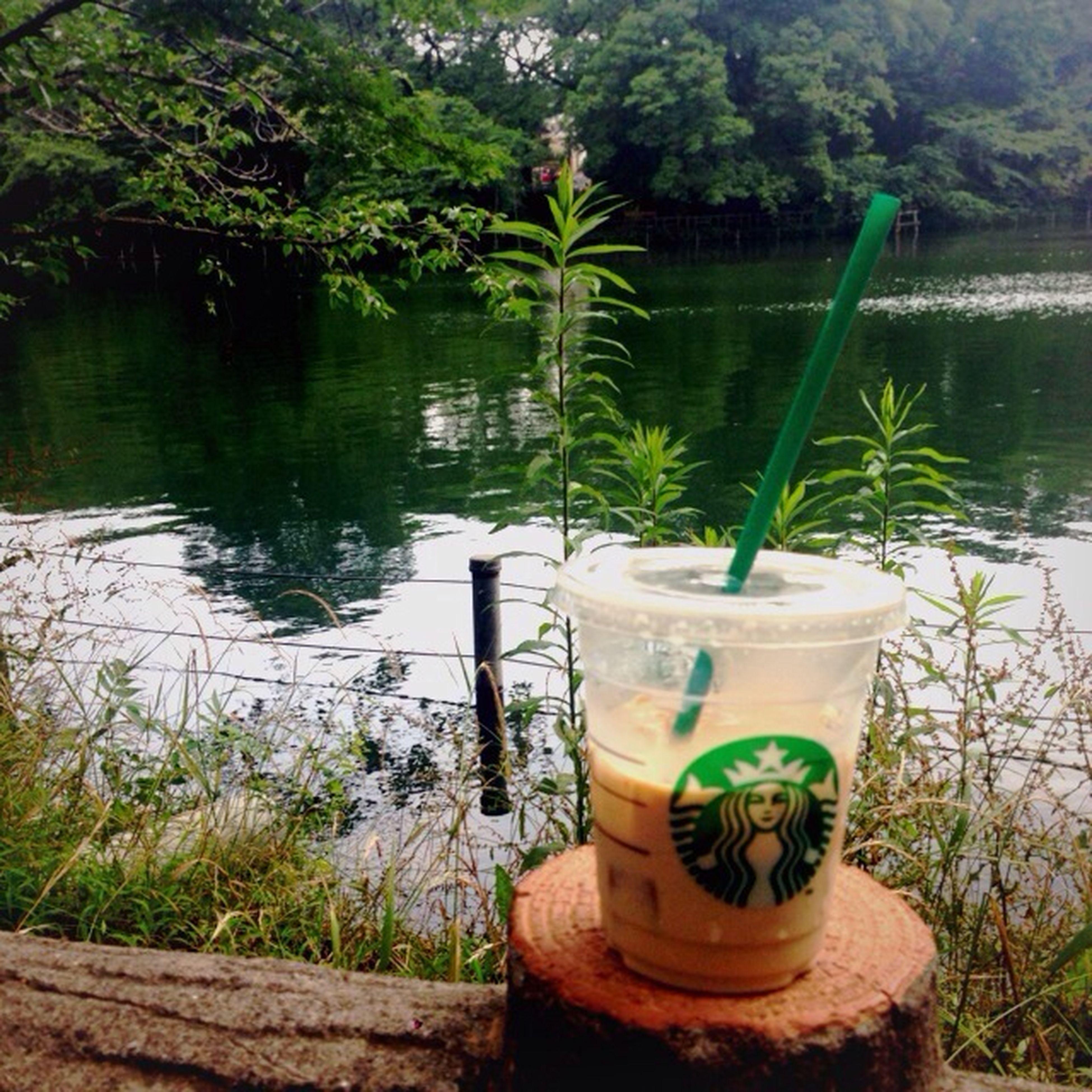 Starbucks Yum Green