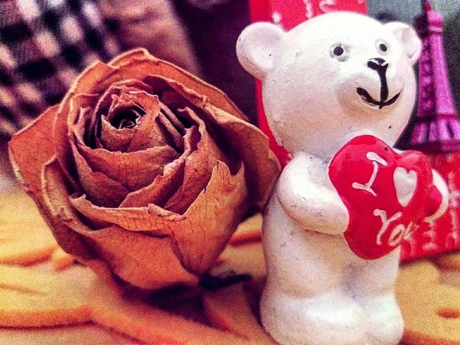 Memories ❤ Love ♥ Rose🌹 Dream Kisses :*