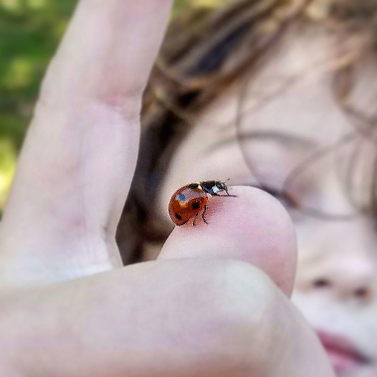One Animal Insect Human Finger Animals In The Wild Lifestyles Ladybug🐞 Ladybug Ladybirds 🐞 Close-up Ladybeetle Lady