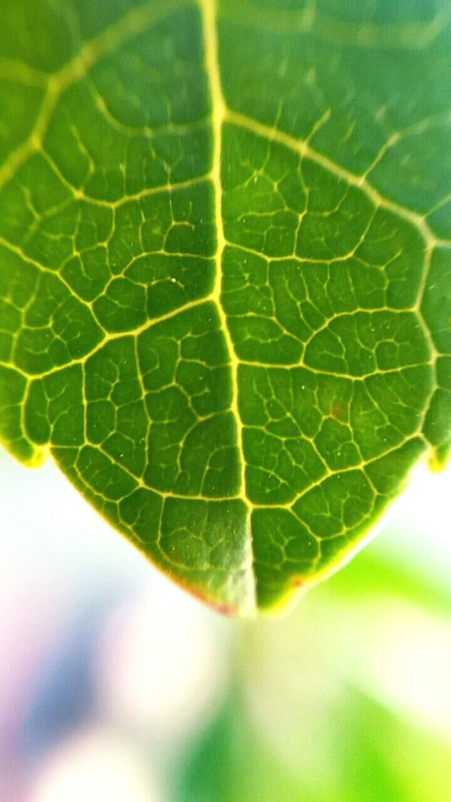 Leaf Green Leaf Nature Talking Photo Natural Beauty Beautiful Nature Zoom