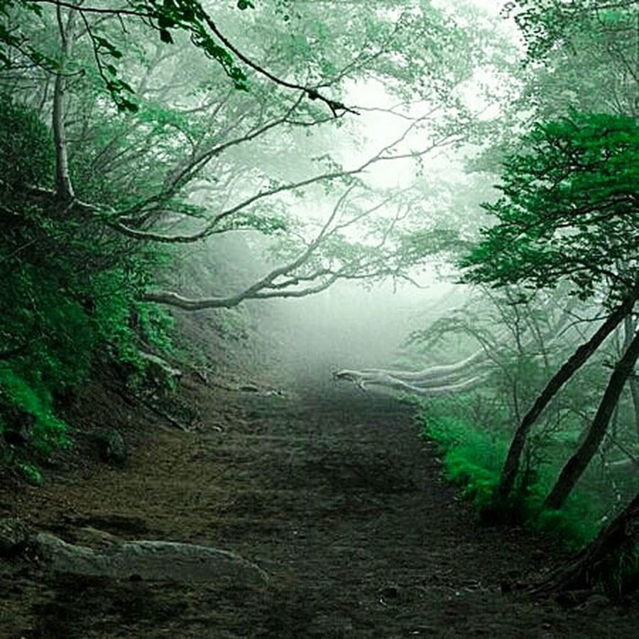 Aokighara,japan,the forest of suicide Mont Fuji Love Japan