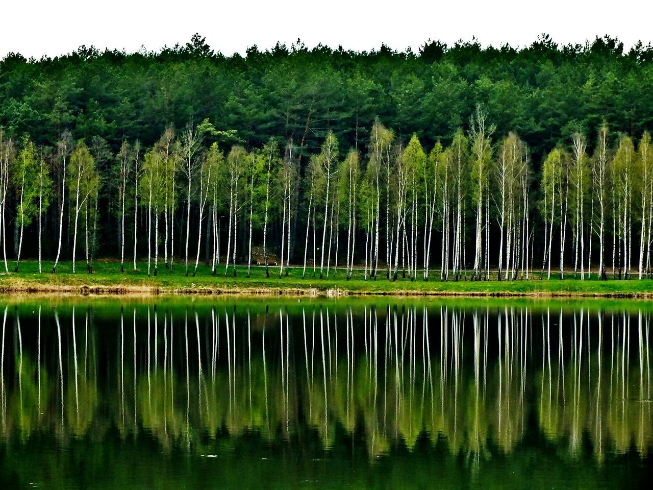 Beauty In Nature Green Color Tranquility Springtime Tranquil Scene Lake Tree Water Birch Tree Birch Birches Mirror Reflection Mirrored Mirror Effect Mirroring In Water Mirrorlake Mirror Lake