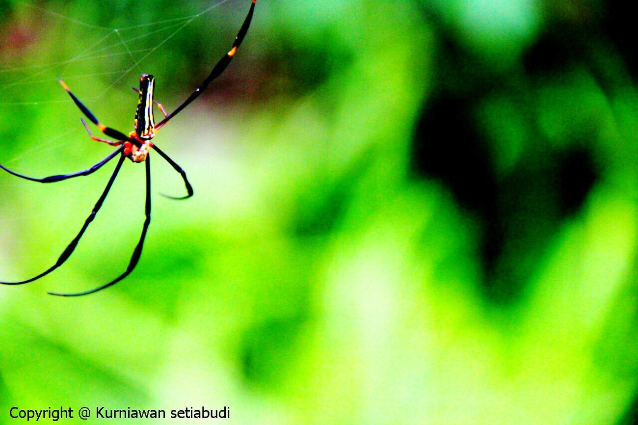 © Kurniawan setiabudi Streetphotography Canon EOS 60D Macro Photography Taking Pictures Taking Photos Popular Popular Photos Taking Photo Spider