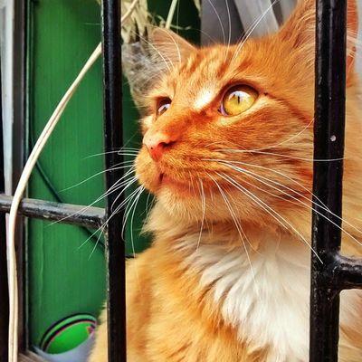 Pensativo!! Catlover