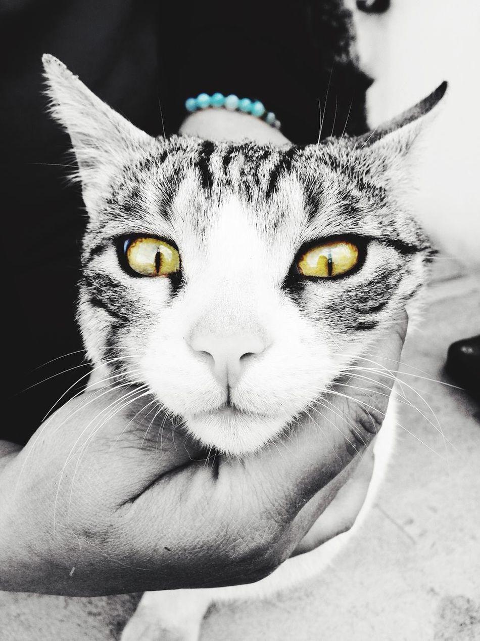 Cat Kuchingcatslovers EyeEm