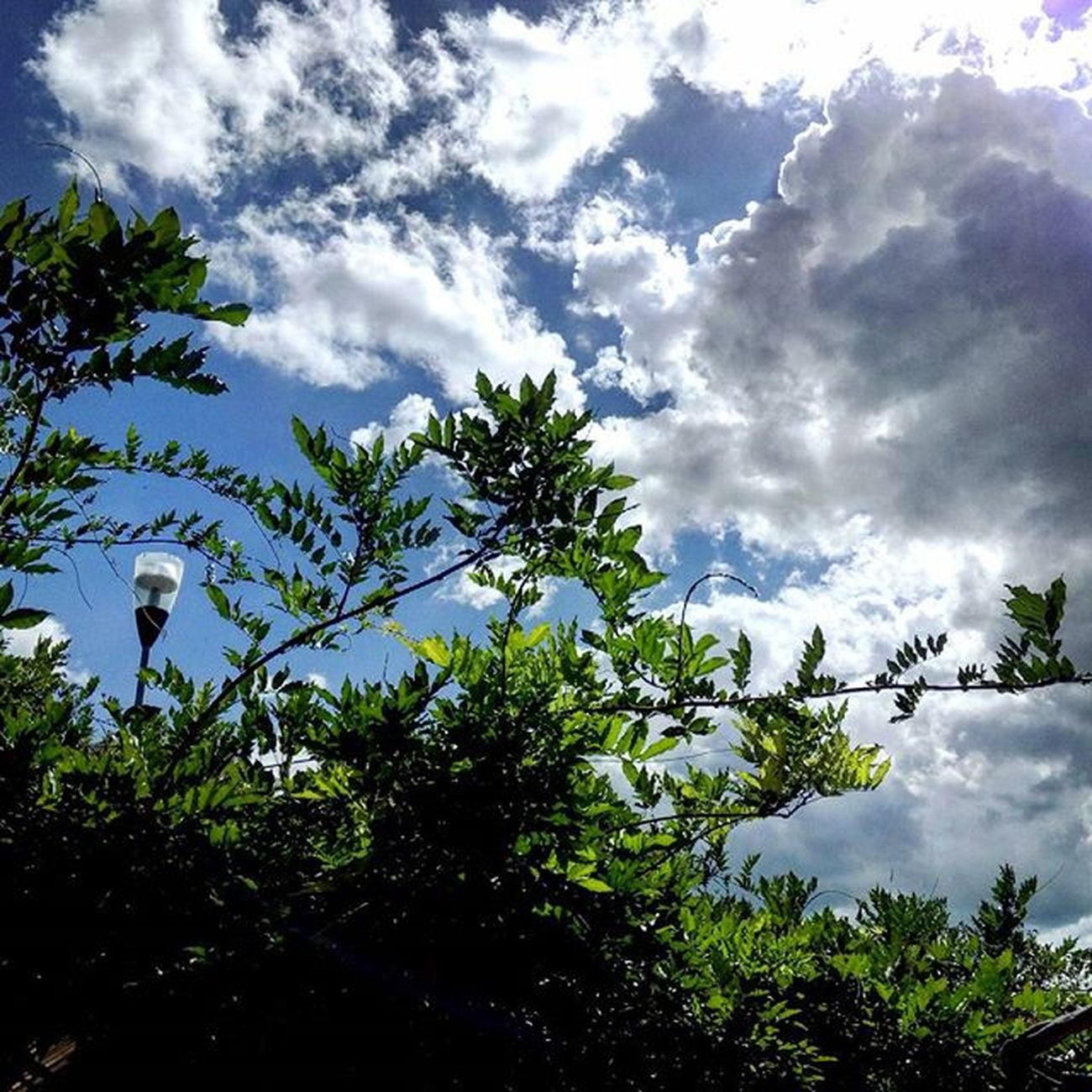 incontro . Sky Skylovers SkyClouds Clouds Cloudscape Cloudslovers Leaves Blue Green Nature Naturelovers Marche Italy Italia Igersmarche Igersitalia Liveloveitalia Cielo Cieloazzurro Sunlight Landscape