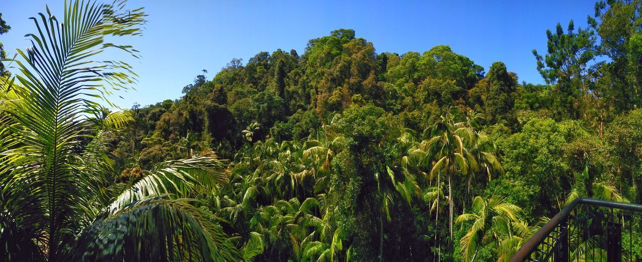 Growth Tree Low Angle View Green Color Palm Tree Clear Sky Blue Scenics Nature Beauty In Nature Green Tranquility Tranquil Scene Branch Sky Tall - High Outdoors Lush Foliage Day Palm Frond AdamTurnerPhotography