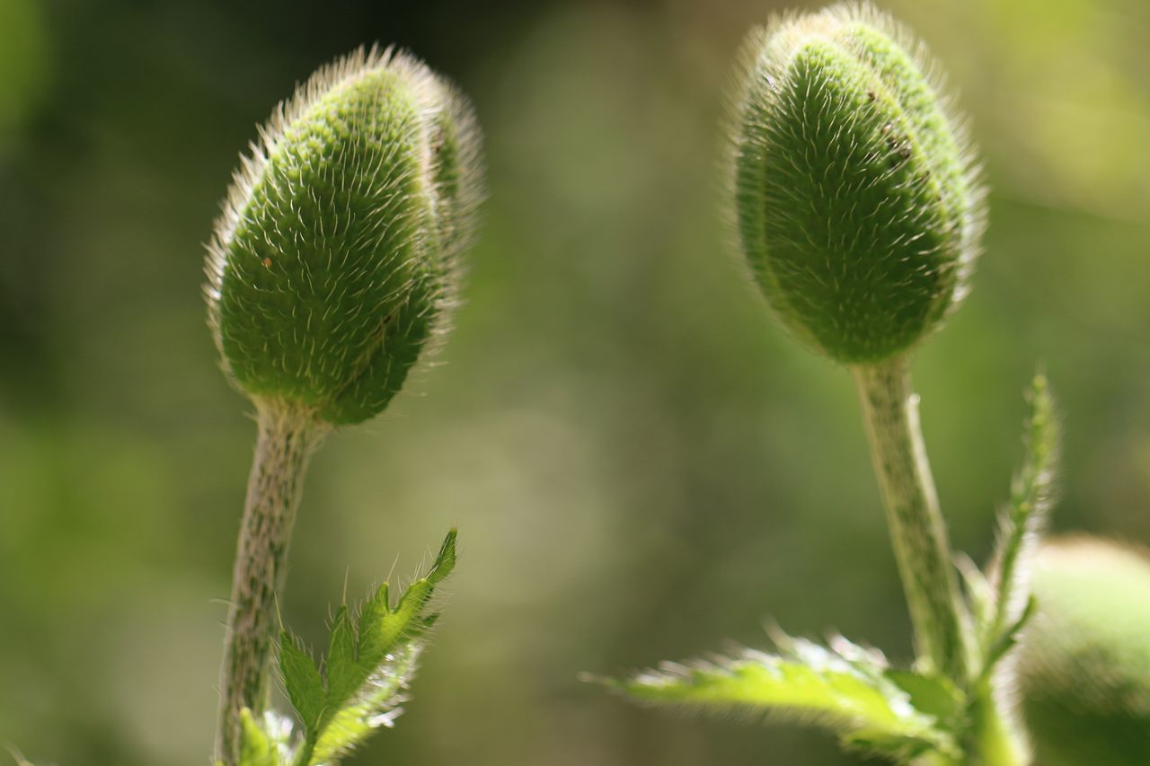 Plant Nature Close-up Green Color Springtime Outdoors Seed No People Growth Beauty In Nature Flower Uncultivated Day Freshness Thistle Two Of A Kind