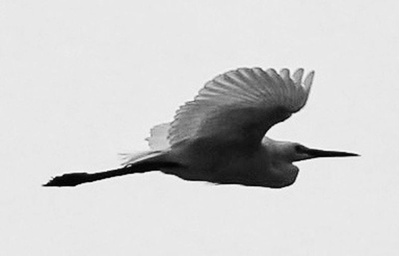 Fly Alone Bw_collection EyeEm Nature Lover EyeEm Best Shots