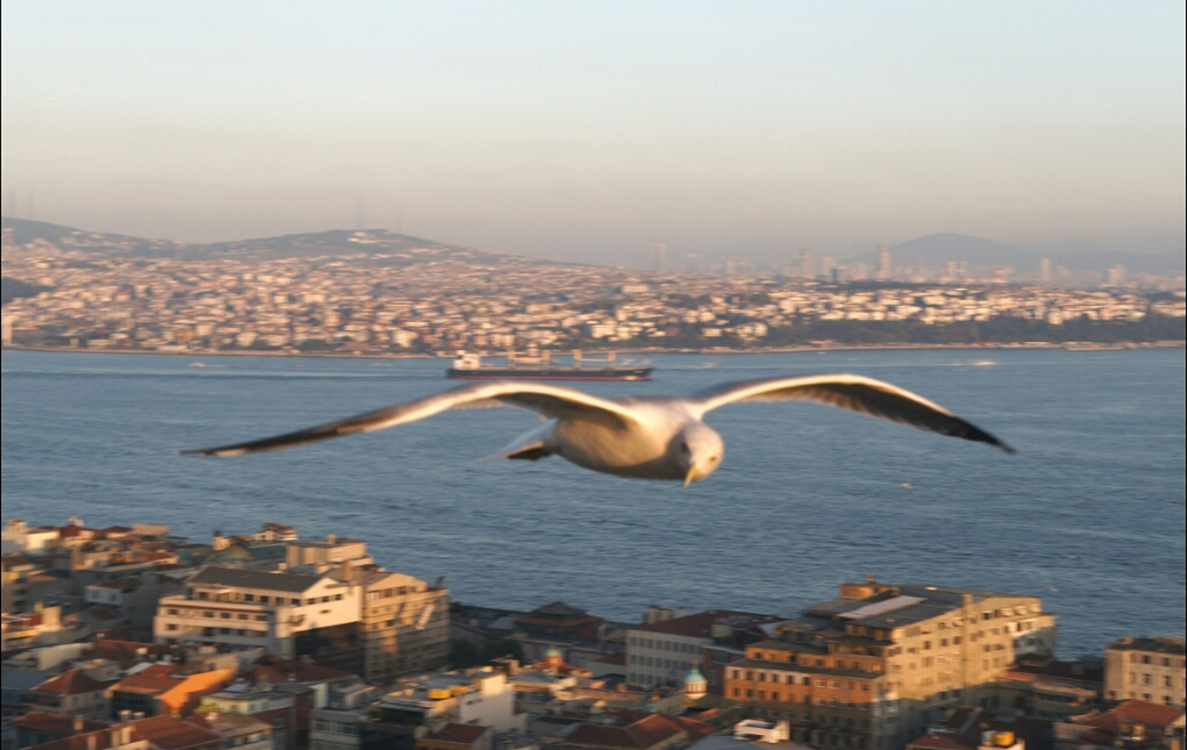 architecture, city, cityscape, built structure, bird, building exterior, flying, water, animal themes, sea, clear sky, seagull, animals in the wild, river, transportation, wildlife, copy space, mid-air, mountain, sky