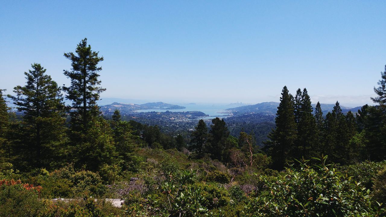 The view from Mount Tamalpais in Marron County California. San Francisco Bay and San Francisco. San Francisco Bay San Francisco Marin County California Landscape No People Summer Views Live For The Story Copy Space Perfect Summer Day