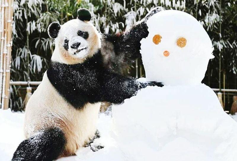 دب يداعب رجل الثلج 😁 Close-up Day Nature