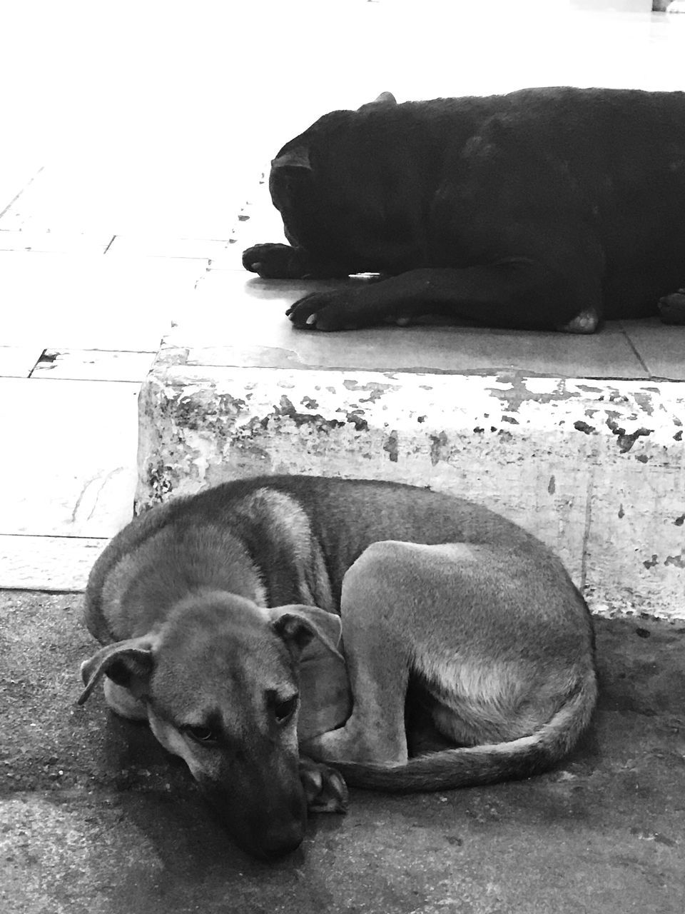 animal themes, mammal, pets, dog, domestic animals, two animals, sleeping, relaxation, resting, no people, eyes closed, lying down, togetherness, young animal, sitting, indoors, full length, day