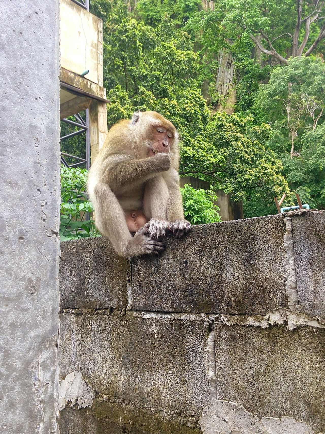 Animal Themes Day No People Monkey Nature Monkeyisland Eating!  Monkeylove Cute♡ Love Nature Moments Relax Time  Beauty In Nature