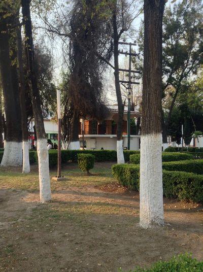 Mexico Jardines Kiosco  Photography Streetphotography