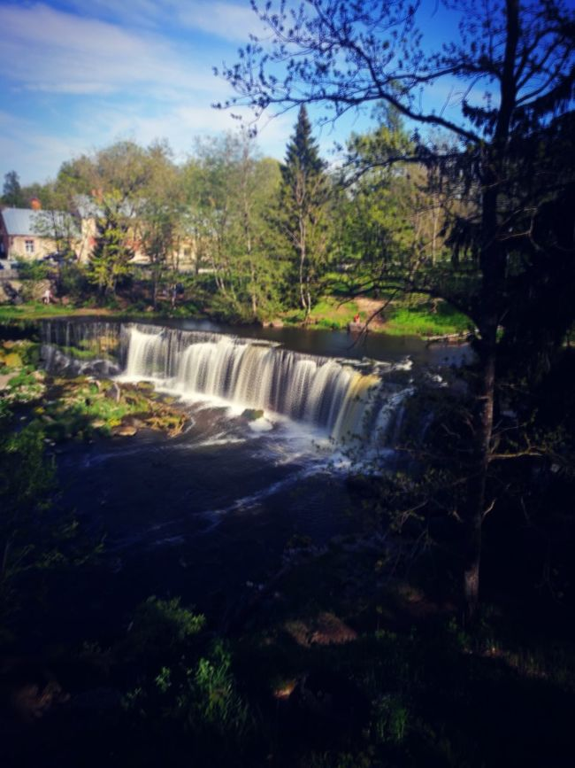 Keila Joa Waterfall Water Tree River Nature Forest Power In Nature Beauty In Nature Estonia Huaweiphotography HuaweiP9 HuaweiP9Photography Estonian Landscape Estonian Nature