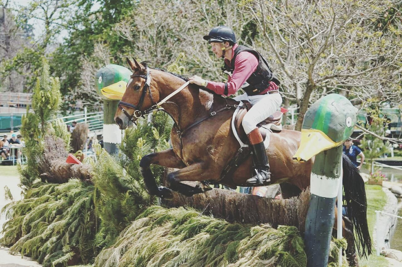 Horse Riding Working Animal Outdoors Animal Equestrian Life Equestrianlife Equestrianphotography Equinephotography Equestrianism EventPhotography Eventing Domestic Animals Animal Themes One Animal Mammal Sitting Adults Only Tree People Day One Person Adult Elephant Only Men First Eyeem Photo