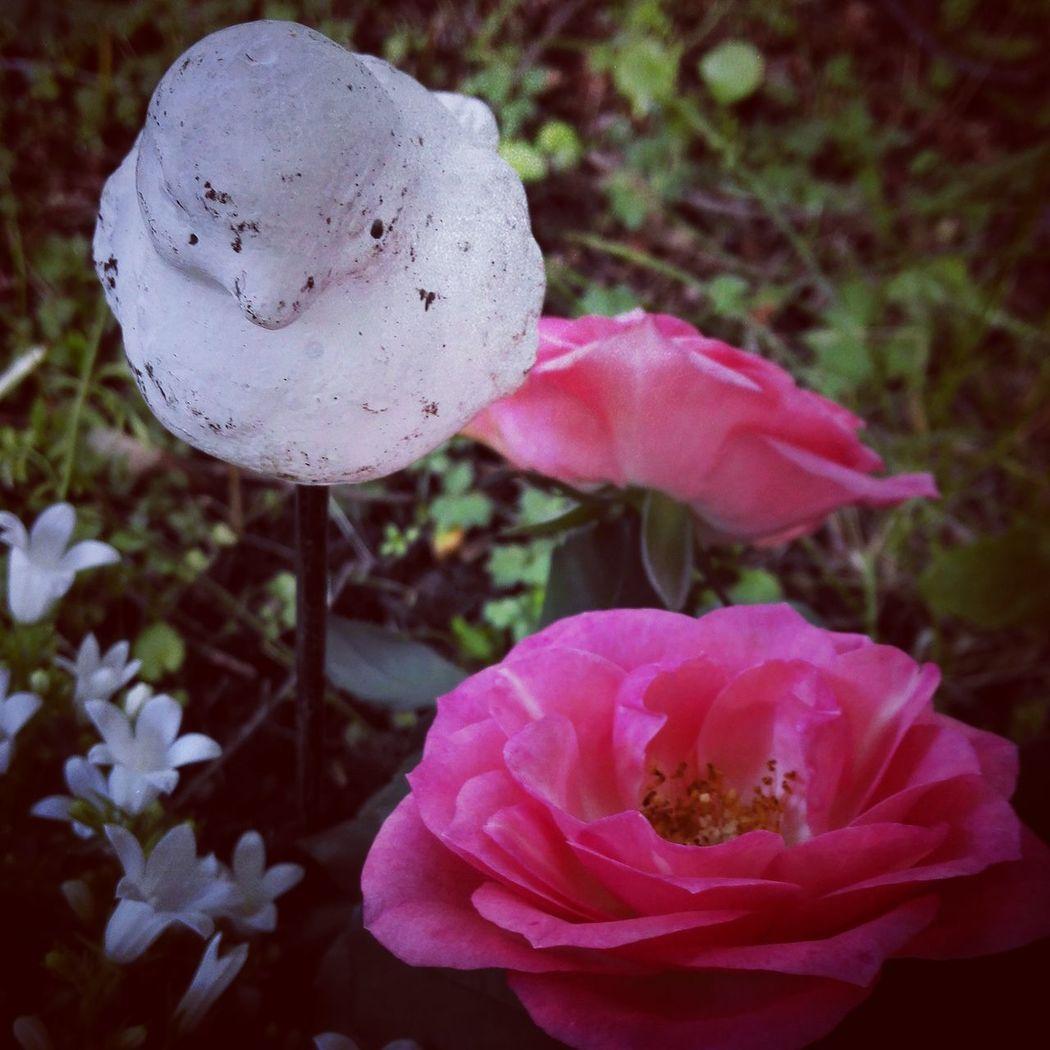 Pink Roses White Flowers Graveyard Beauty Ceramic Bird Peace And Quiet Vestregravlund