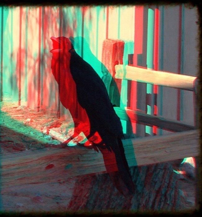 Inspired by and dedicated to Dennis Tyler. Raven Wildlife & Nature Creative Photography Creative Shots Photo Art Artsy Photography 3-D Effect Creative Editing Artistic Photography What's Going On? My Home Multi Colored