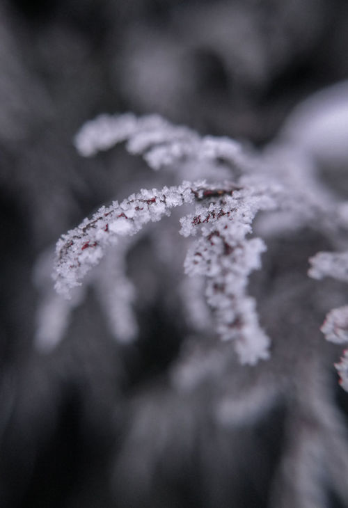 Beauty In Nature Botany Branch Close-up From My Point Of View Frozen Ice Crystals Leaves Má Nature Softness