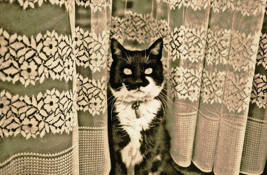 Chat Gato😽 Cat Tbt💕 Negtive Film Sepia Retro Belgium Bruxelles ベルギーの猫 セピア