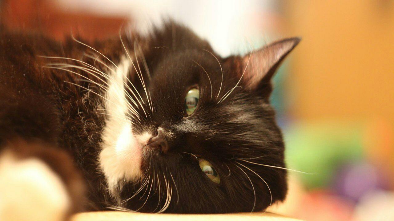 Cat Mycat Animals Sleeping Helios Helios 44-2 44-2 Oldlens Portrait