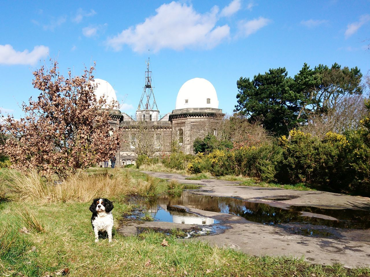 Sky Tree Architecture Outdoors Animal Themes Grass Dome Bidston Hill Merseyside Wirral Cavalier King Charles Spaniel Reflection Observatory Weather Observatory Abandoned
