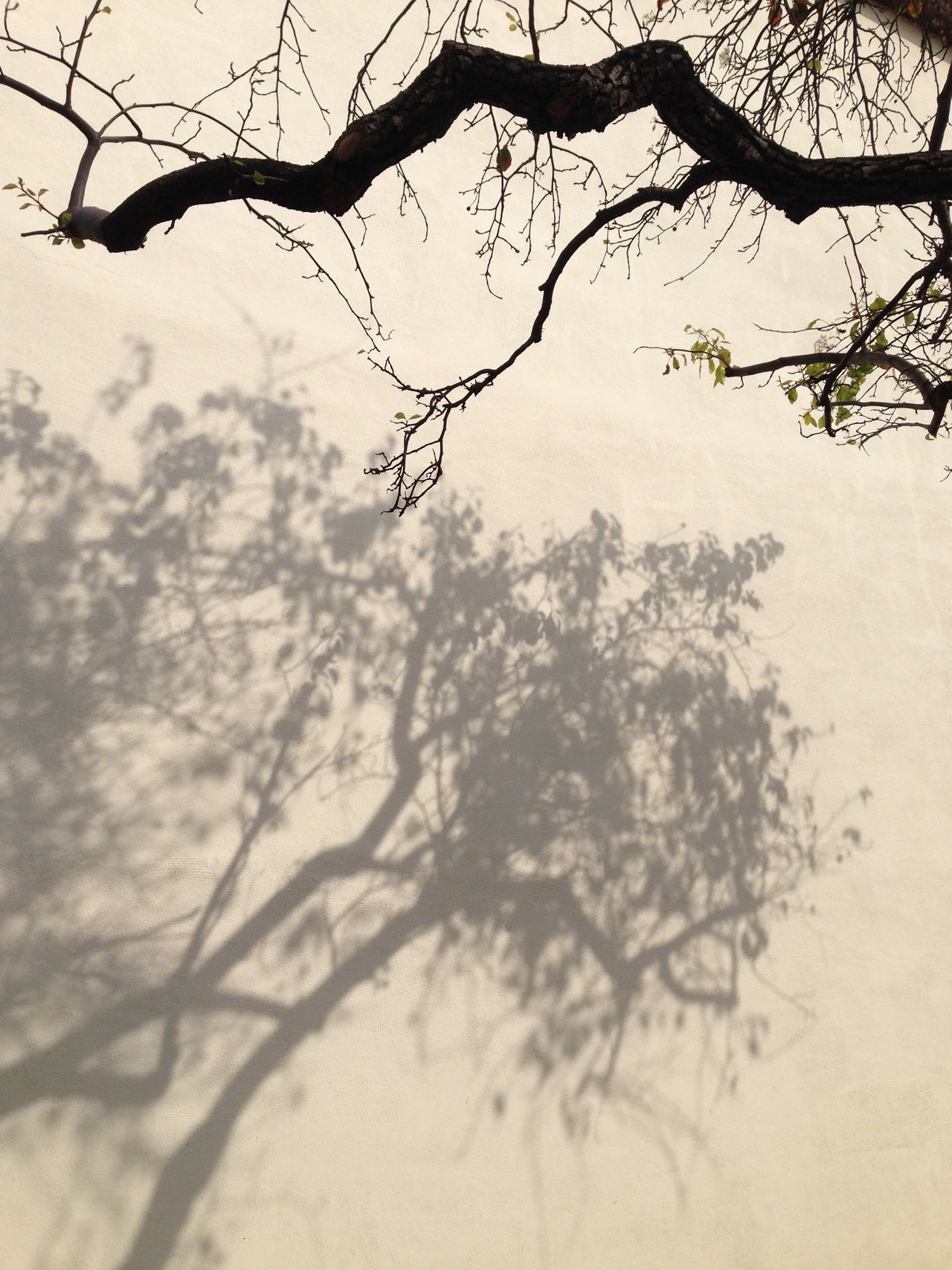 Trees Branches Light And Shadow Shadow Dancer