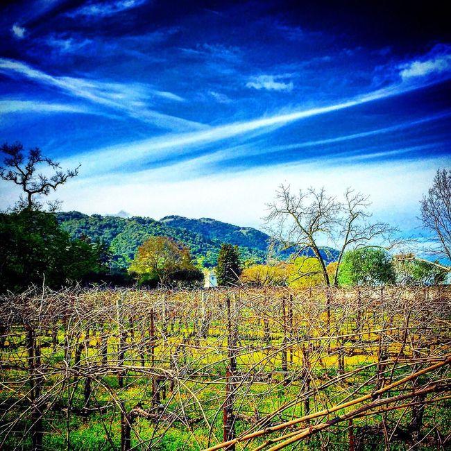 Blue Sky Greenmountain Vineyards
