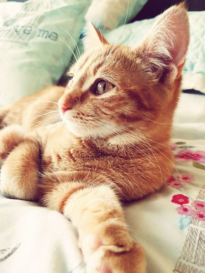 A cat's life. Cat Lovers Pets Close-up Animal Themes Mamalade Wasakitten Beautiful Gingerkitty