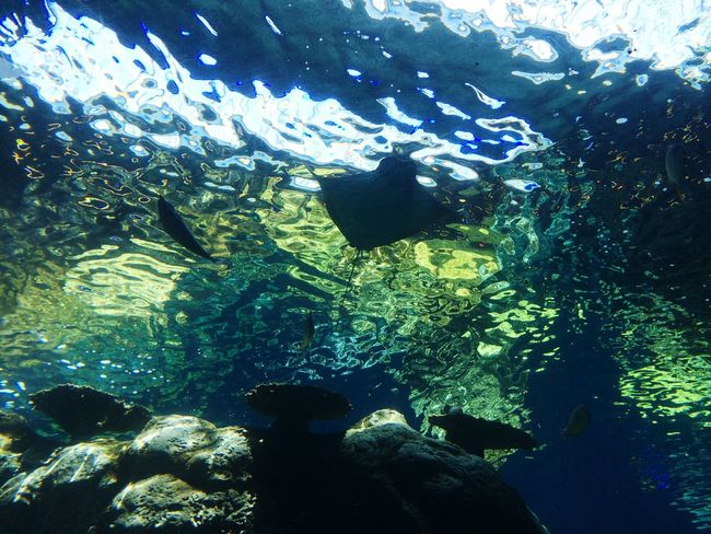 Taking Photos Hello World Enjoying Life Oceanlife Ocean Pivotal Ideas Backgrounds Color Palette Shootermag Underwater Aquarium Sea Life Beauty In Nature Colour Of Life Exceptional Photographs EyeEm Nature Lover From My Point Of View Glowing Natural Pattern Stingray Underwater World Underwater Photography Underwater Life